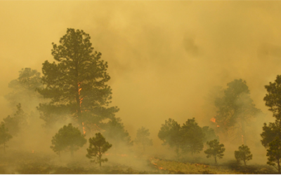 Forest service must use new tools to reduce wildfire