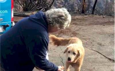 Dog waits for owners to return  after wildfire